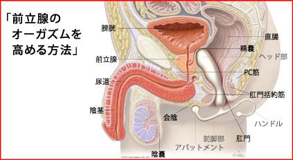前立腺とオーガズム