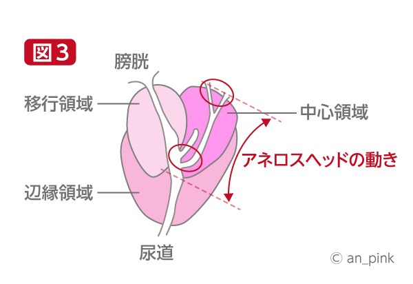 ドライオーガズムの考察詳細3